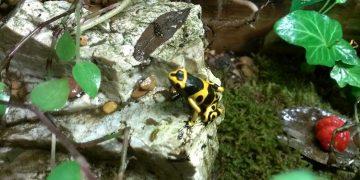 Frog sitting on rock in a tank