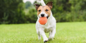 Dog with ball in his mouth