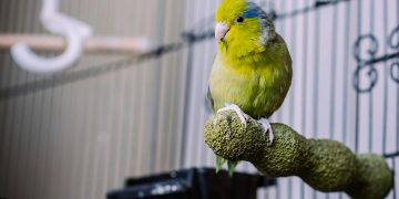 Bird on perch in cage