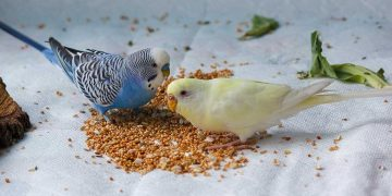 Two birds eating their bird food.