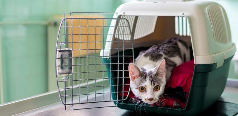 Cat inside a pet carrier