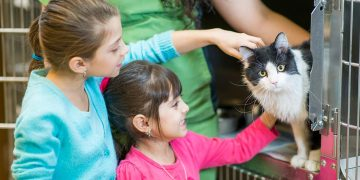 Two little girls petting a cat at an animal shelter