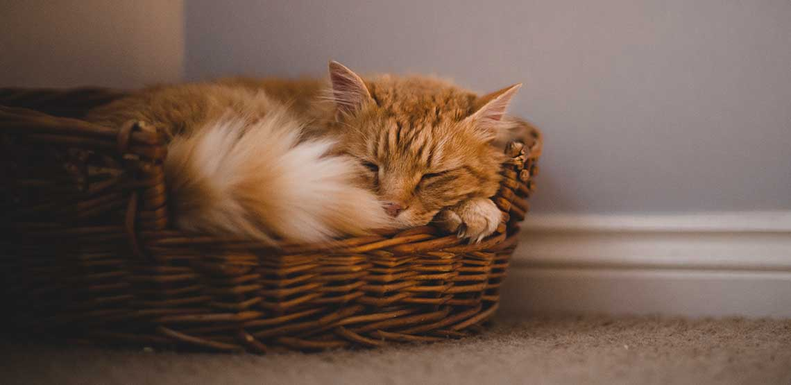 An orange cat sleeping in its bed.