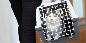 A cat in a cat carrier.