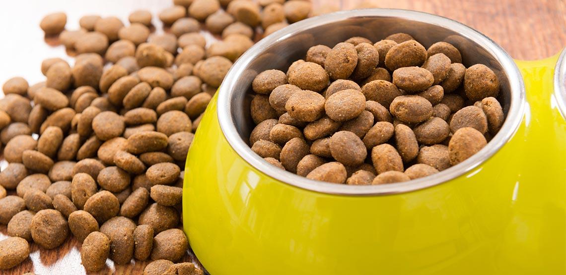 Yellow bowl full of cat food