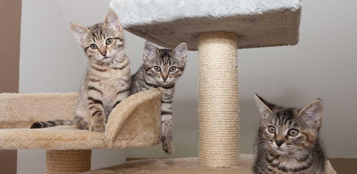 Three kittens sitting on their cat furniture.