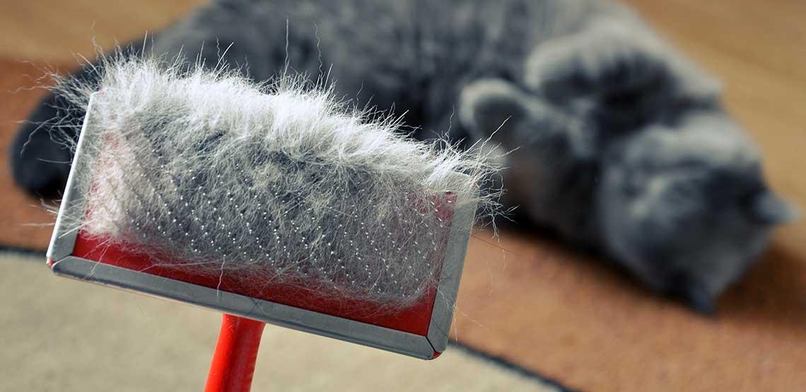 A cat brush full of cat hair.
