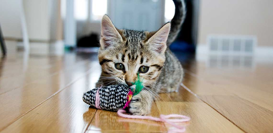 A kitten playing with a cat toy.