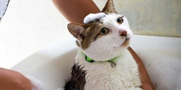 A cat with bubbles on their head.