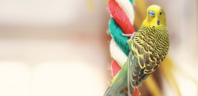 Bird hanging on a rope