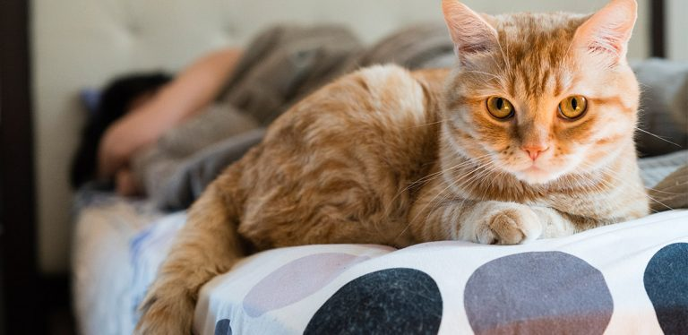 Cat lying on end of bed as owner sleeps in background