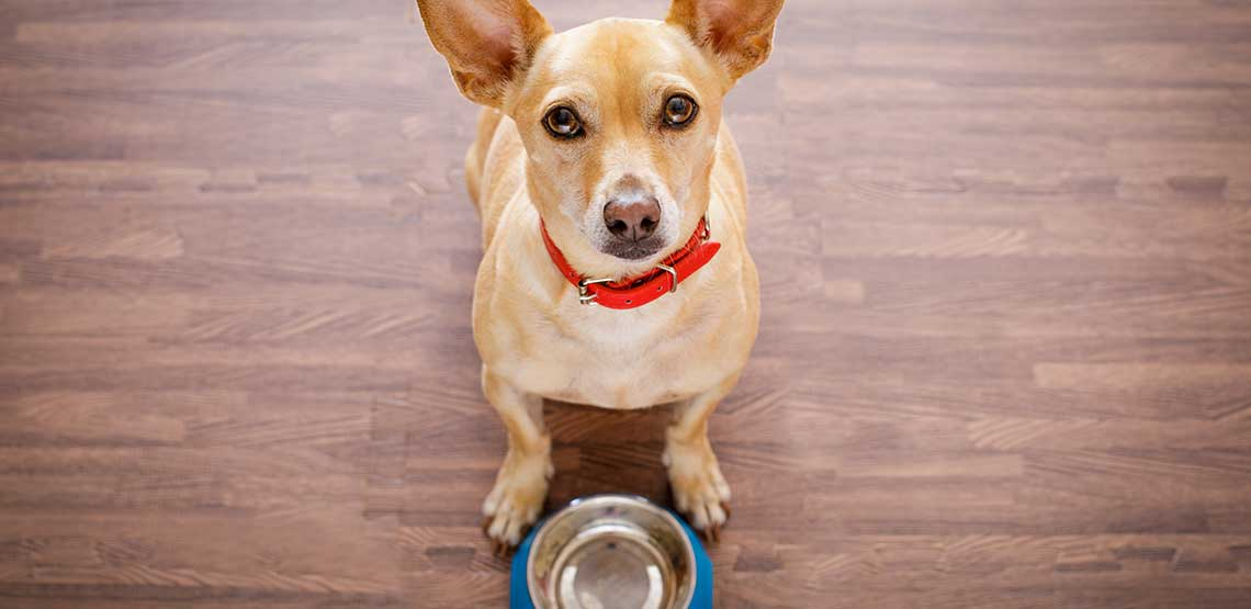 A dog with an empty food bowl.