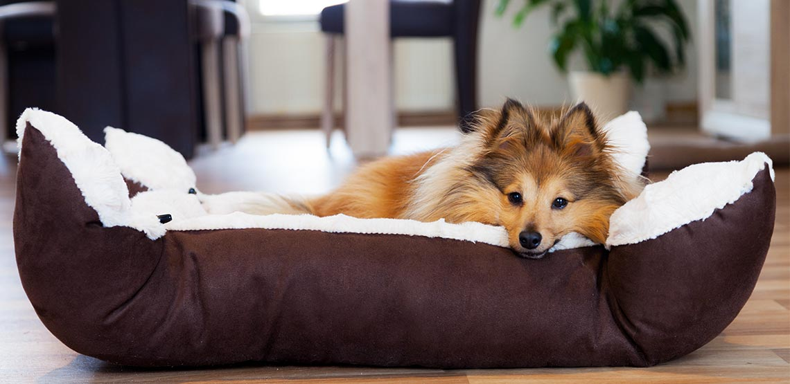 Dog lying in a bed