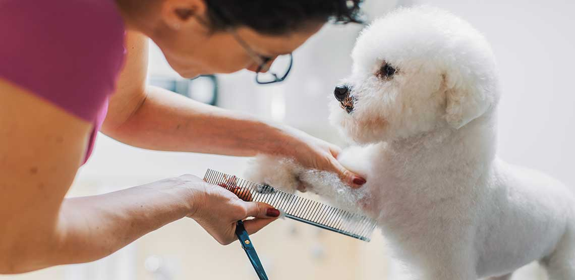A dog getting its nails cut.