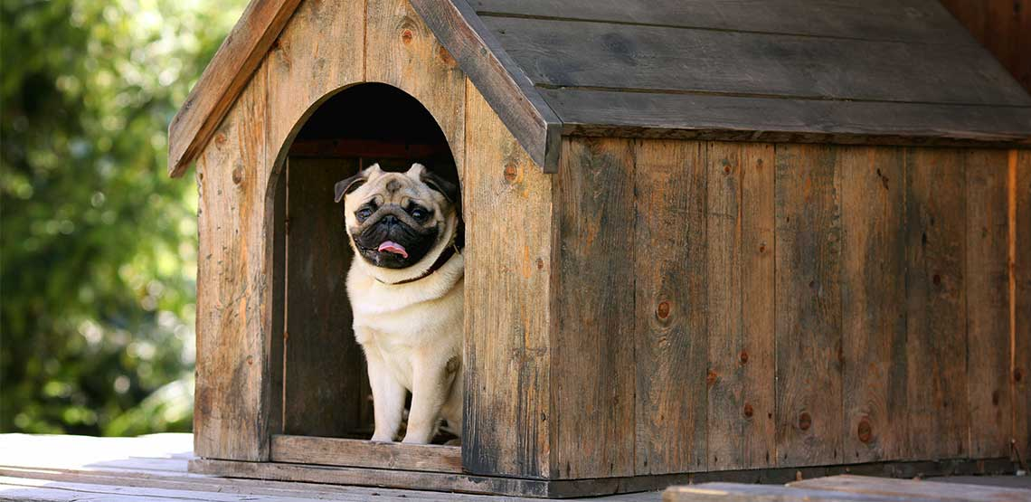A pug sitting in its dog house.