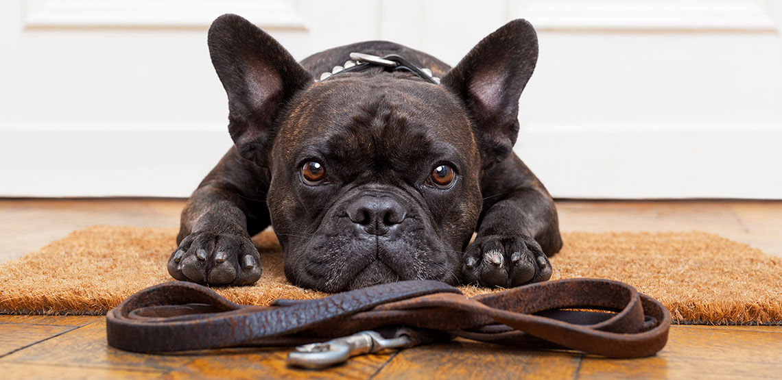 Dog lying with leash in front of it