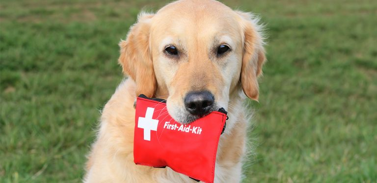 Dog holding first aid kit in mouth