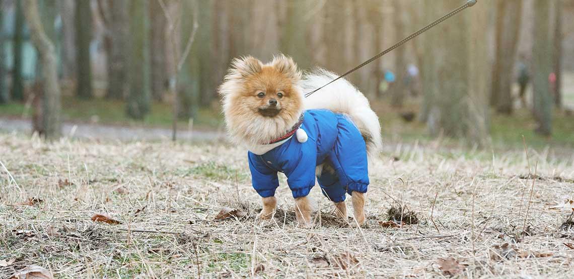 A dog wearing a winter jacket.