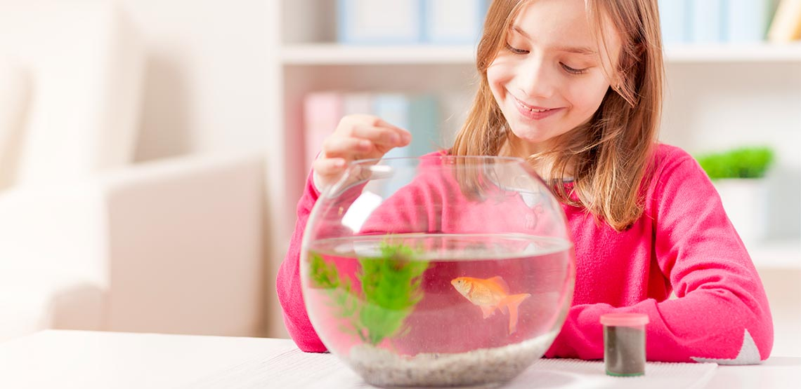 Little girl feeding goldfish in fish bowl