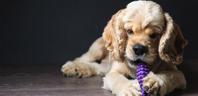 Dog lying on ground chewing on toy