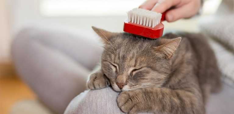 Cat being brushed.