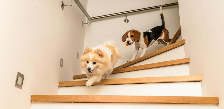 Two dogs running down steps