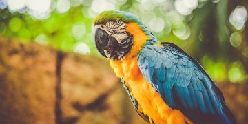 Colorful macaw with jungle background