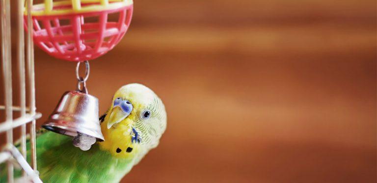 Bird ringing a bell