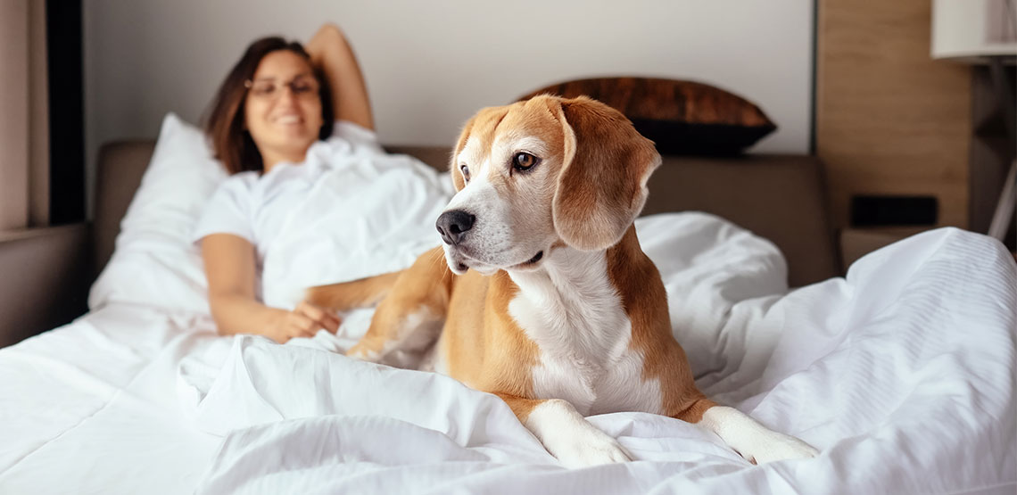 Woman and dog lying on a hotel room bed