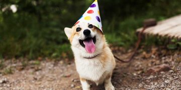 A dog wearing a birthday hat.