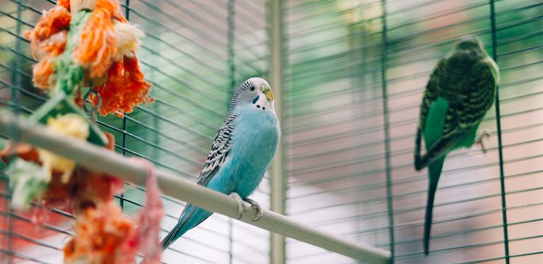 Birds on perch in cage with ropes hanging down