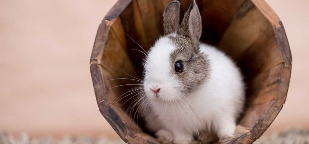 A pet rabbit sitting in a wooden bucket.