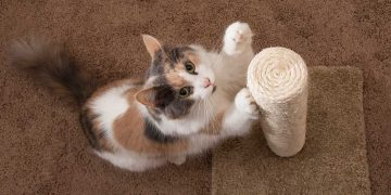 A cat using a scratching post.