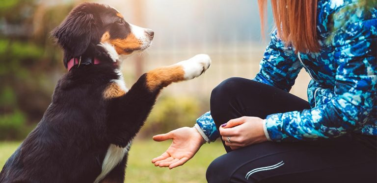 Dog raising paw to put in owner's hand