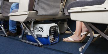 Small dog in carrier underneath seat on airplane