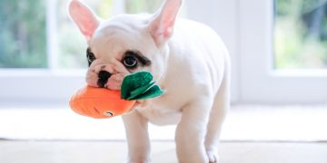 Dog with carrot stuffed toy in mouth