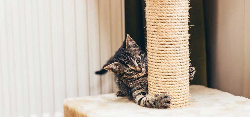 A kitten scratching a scratch post