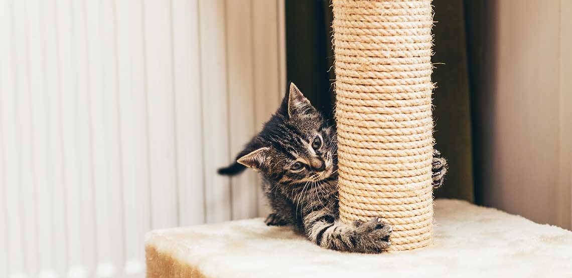 A kitten scratching a scratch post