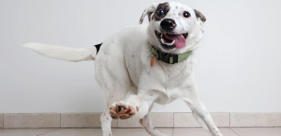 A dog wearing their collar.