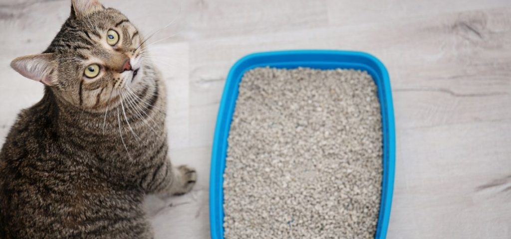 A cat sitting next to its litter box.