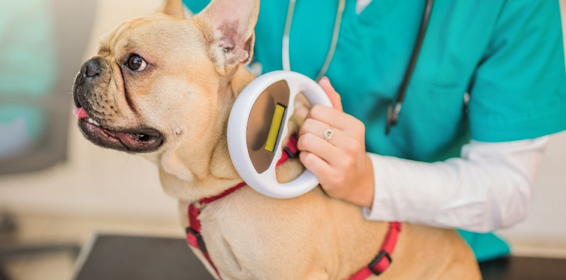 A vet is scanning a dog's microchip.