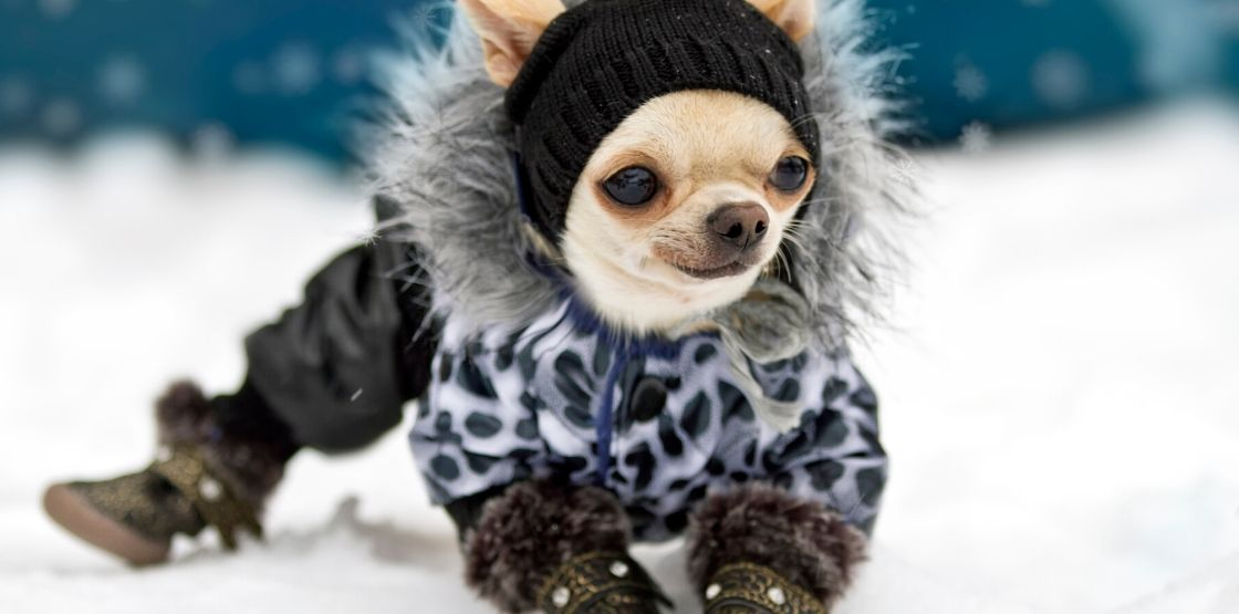A dog wearing winter accessories.