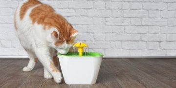 A cat drinking out of a flower fountain.