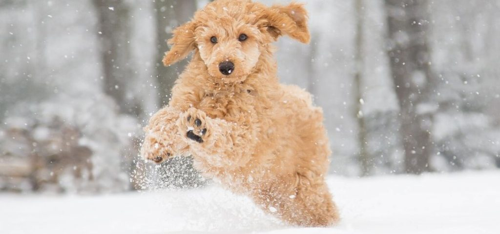 A dog playing in the snow.