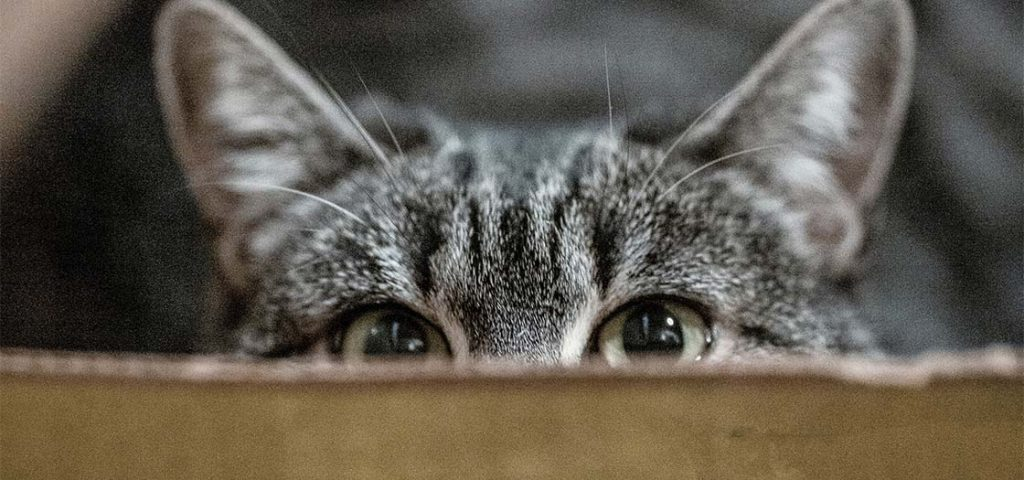 A cat hiding in a cardboard box.