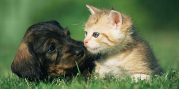 A puppy and a kitten laying in the grass.