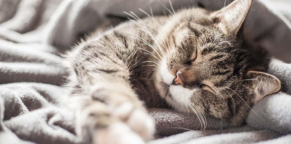 A grey cat sleeping on a grey blanket.