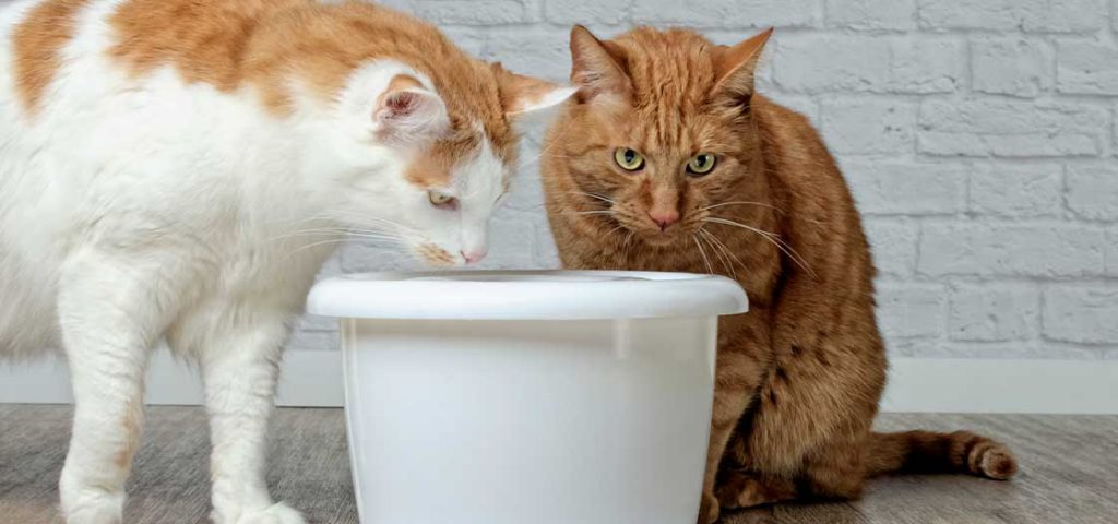 Two cats drinking out of a white cat water fountain.